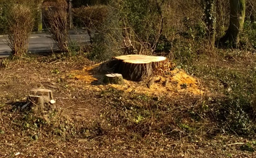 """Bebauungsplan """"Tuchbleiche"""": Bäume entgegen Beschluss gefällt!"""